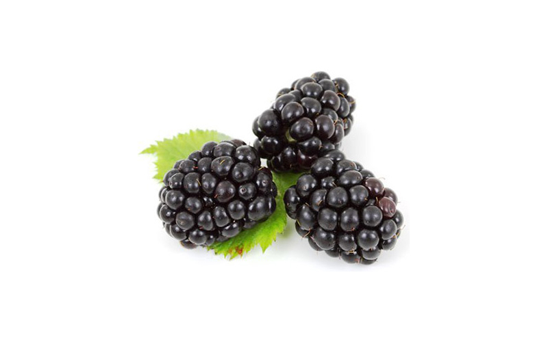 Mulberry extract activates brown fat, shows promise as obesity treatment
