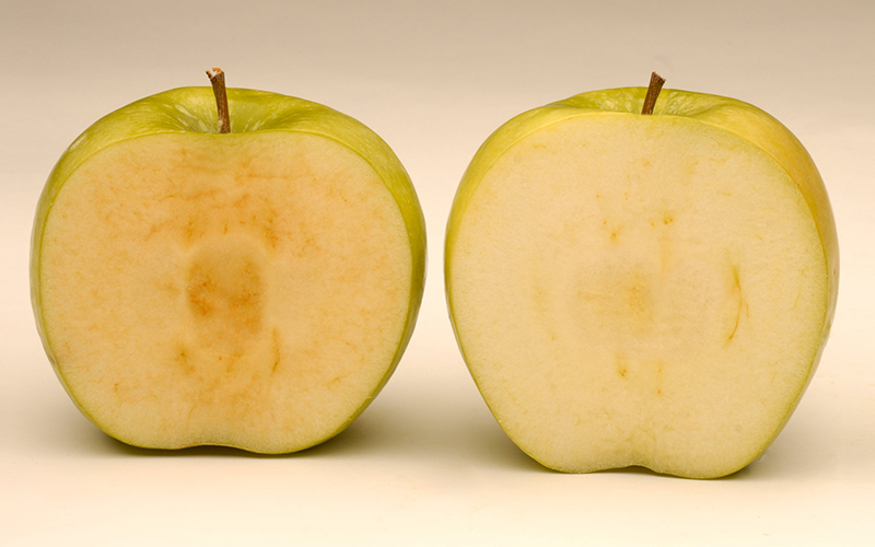 Apples that don't go brown now available in US supermarkets