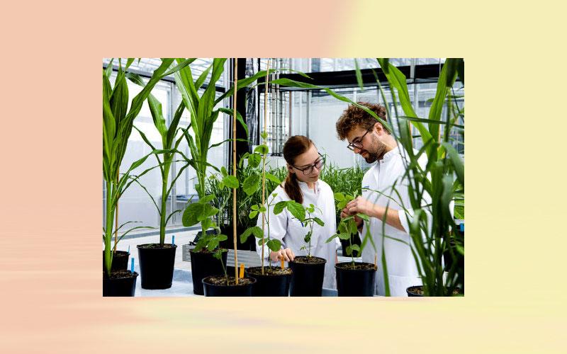 Chr. Hansen reaches 7 % organic growth in 2018/19