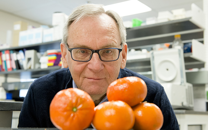 Molecule found in oranges could reduce obesity and prevent heart disease and diabetes