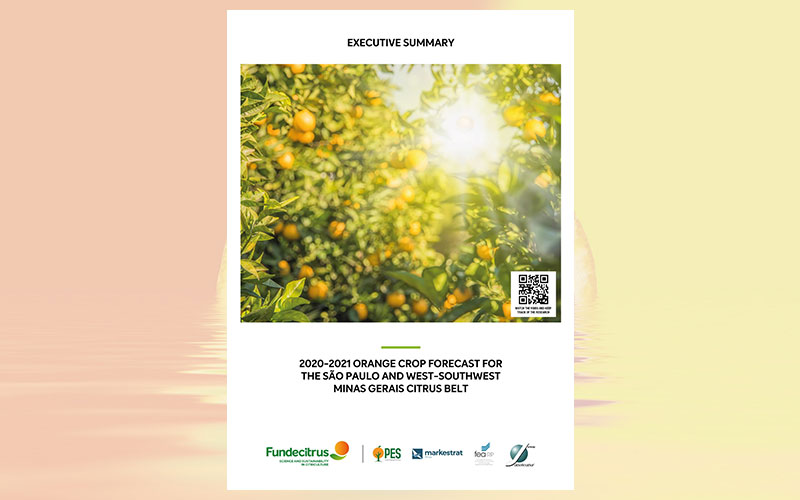 SP and MG citrus belt will produce 287.76 million orange boxes in the 2020-2021 crop