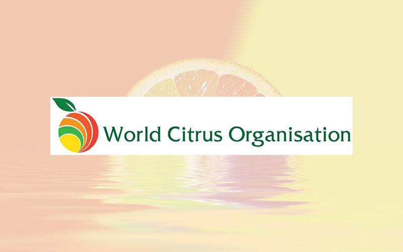 World Citrus Organisation (WCO) presents annual Northern Hemisphere production forecast