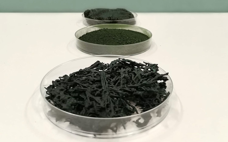 Allmicroalgae: ancient superfood meets modern-day demand