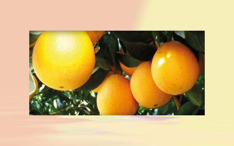Brazilian inventories of orange juice decrease by 33 % between 19/20 and 20/21